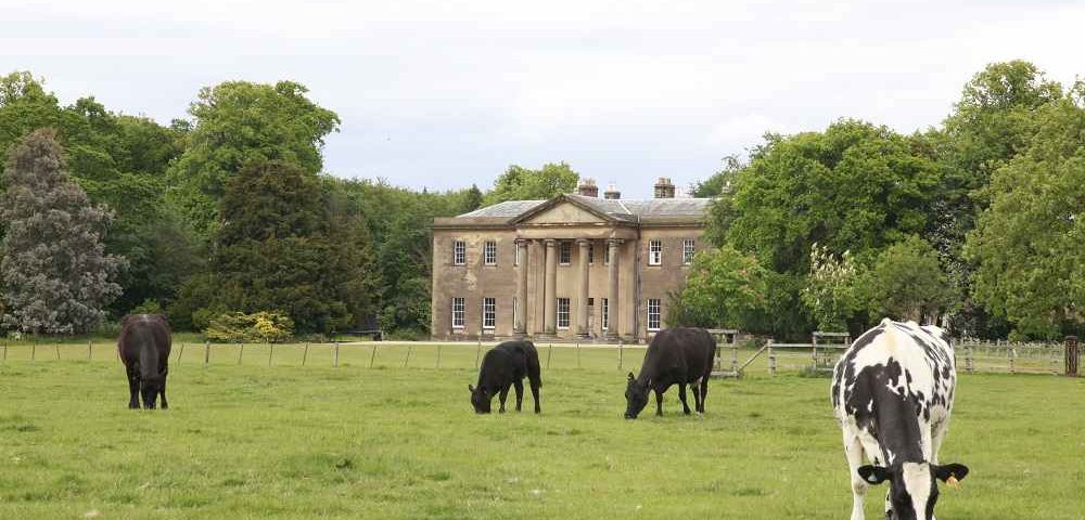 Rise Hall   Dine Venues   Why a country wedding beats a city wedding